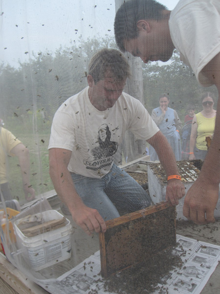 shaking the bees onto newspaper
