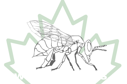 honeybees dot see eh logo