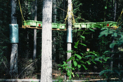 A high platform fastened to large trees holding the nucleus and drone colonies.
